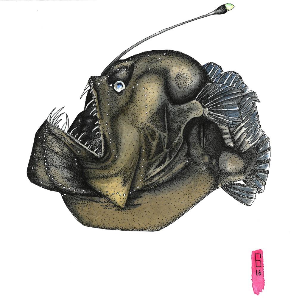 """""""Anglerfish"""", Guillaume Dauphin (PhD), UNB"""