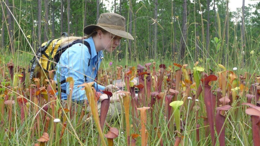 Erin botanising in a Mississippi bog.