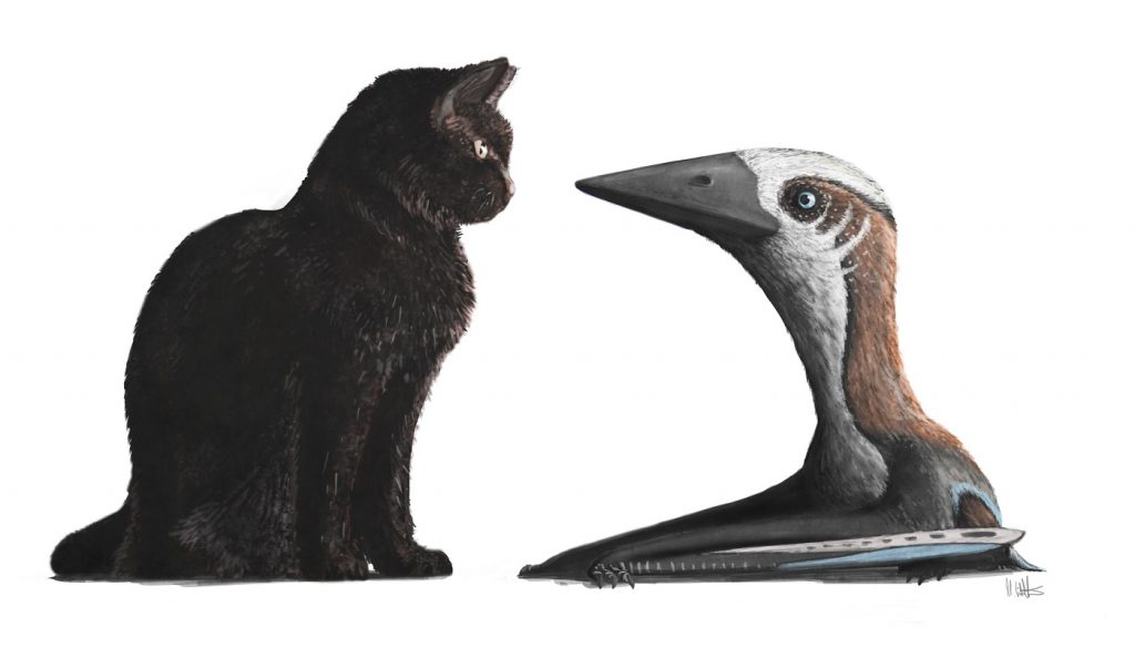 Newly described Hornby Island pterosaur with a familiar scale. Image by Mark Witton, in Martin-Silverstone et al. 2016.