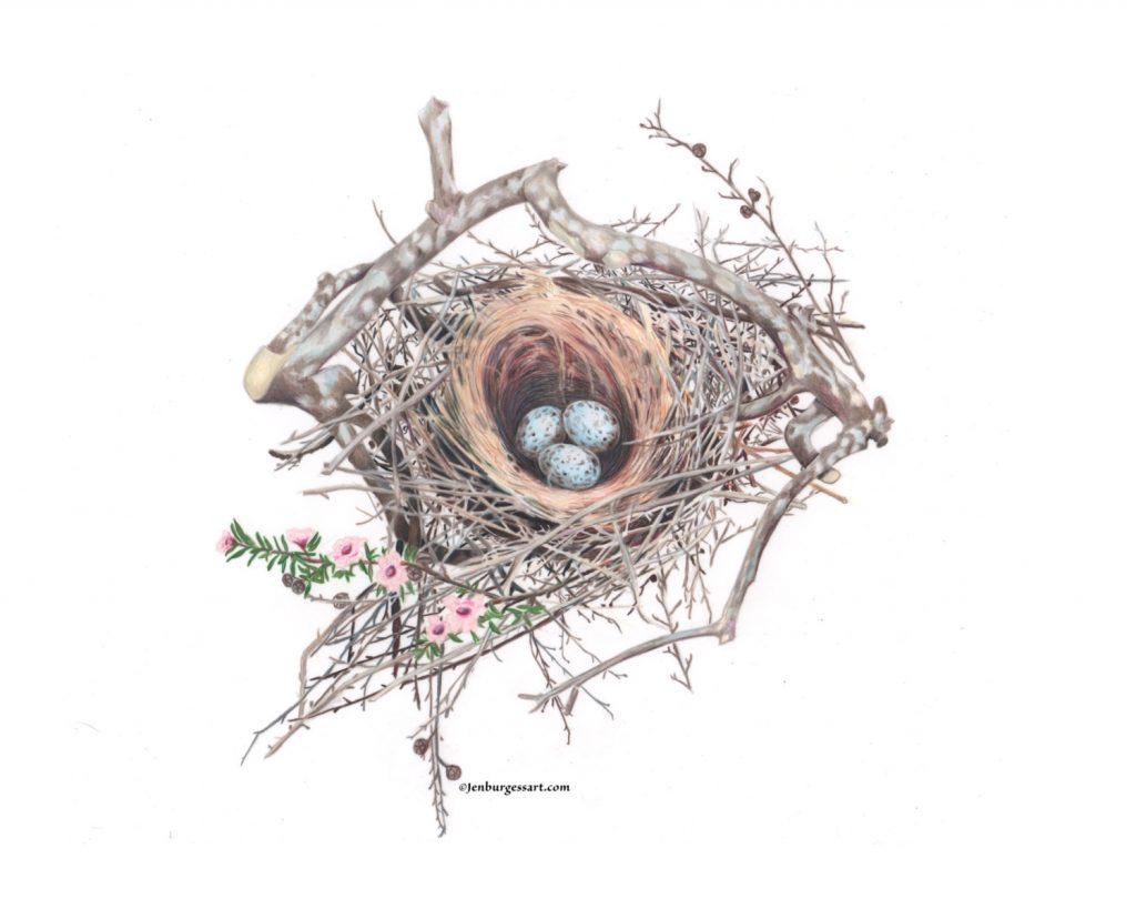Scrub Jay nest print by Jen Burgess