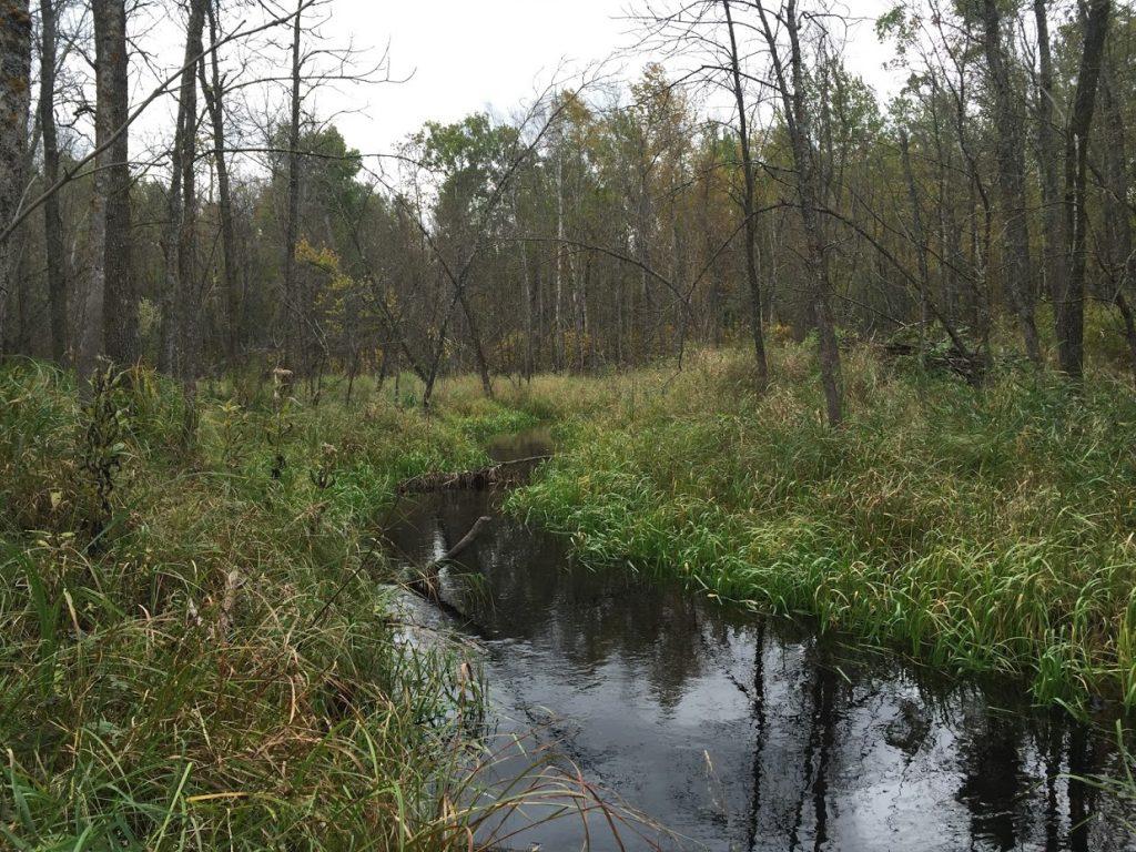 Black-Ashswamp-Cary-Hamel-NCC