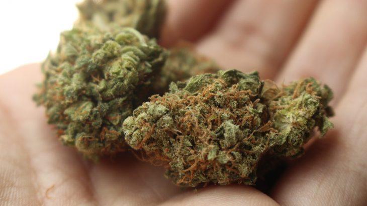 Link: https://pixabay.com/en/weed-cannabis-marijuana-stoner-pot-2517251/