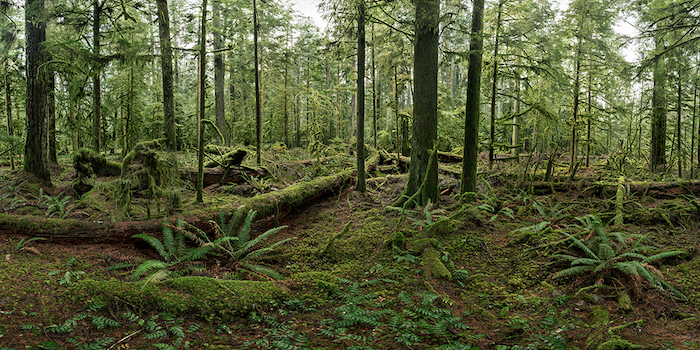 Cathedral-grove-Metivier-gallery