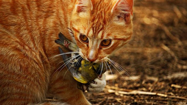 bird-killing cat from Pixabay